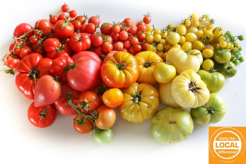 tomato rainbow CRED