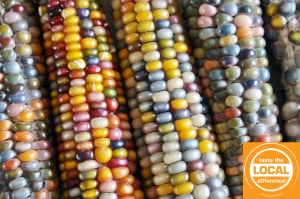glass gem corn copy